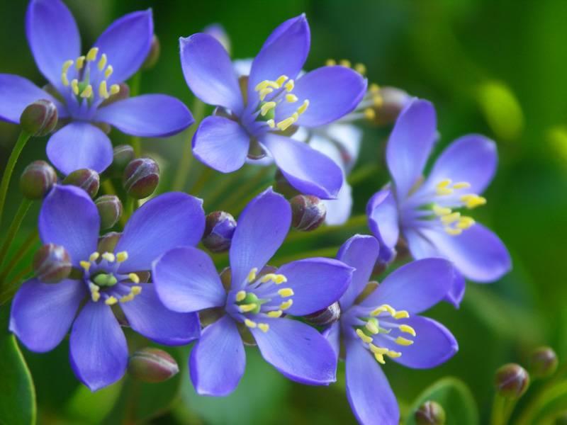 Цветы на ямайке